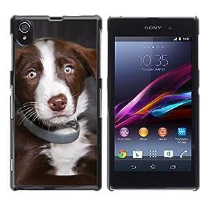 Australian Shepherd Dog Puppy Blue Eyes - Metal de aluminio y de plástico duro Caja del teléfono - Negro - Sony Xperia Z1 L39 C6902 C6903 C6906 C6916 C6943