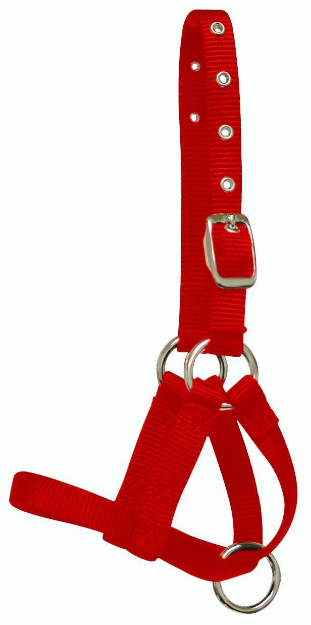 Hamilton 5 by 8 Alpaca Halter with Buckle Adjustable Head Strap
