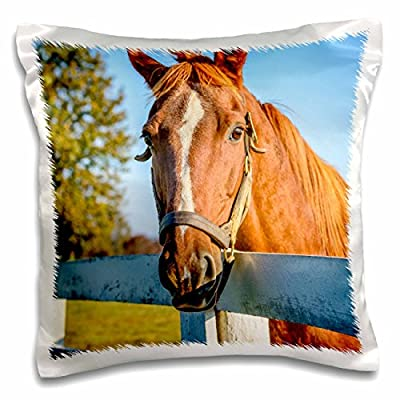 Danita Delimont - Kentucky - Thoroughbred race horse, in his pasture in Lexington, Kentucky - 16x16 inch Pillow Case (pc_230838_1)