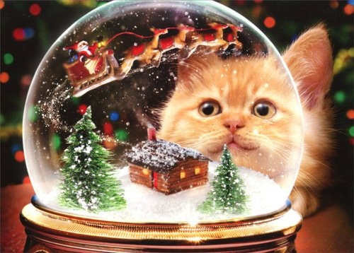 Kitten Snow Globe - Avanti Cat Box of 10 Christmas Cards