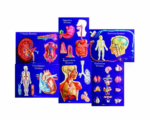 American Educational 6 Piece Master Set of Body Systems by American Educational Products