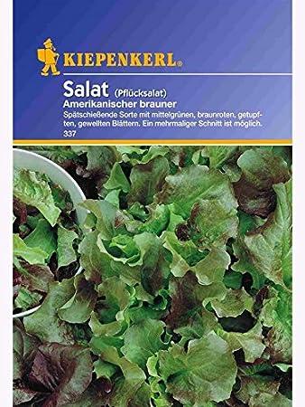 Salat Pfl/ücksalat Amerikanischer Brauner 50gr