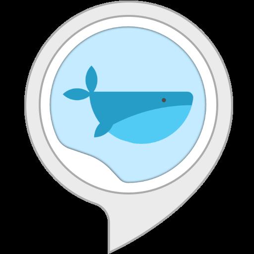 Rumore Ambientale: Balena