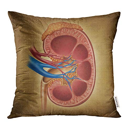 Emvency Decorative Throw Pillow Case Cushion Cover Human Kidney on As Medical Diagram with Cross Section of The Inner Organ and Adrenal 16x16 Inch Cases Square Pillowcases Covers Two Sides Print
