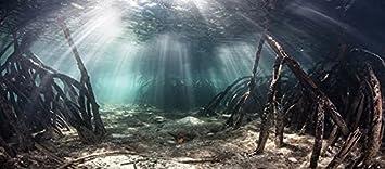 Mangrove with Sunlight//Aquarium Background Fish Tank Background Various Sizes