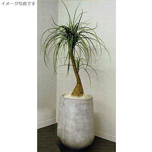 人工観葉植物 アーティフィシャルグリーンアレンジミニノリナ 鉢付き 幅65cm rg-008 B074FWTNVR
