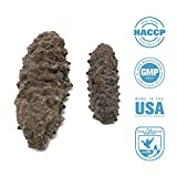 SEABENEFIT Mexico Badionotus Small - Wild Caught Sea Cucumber Dried All Natural Nutritious - 8 oz.