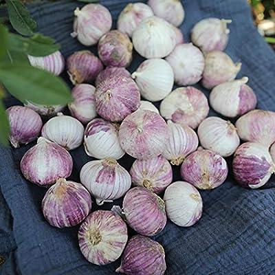 Determina Garden - 100PCS Outdoor Home Garlic Seeds Bonsai Vegetable Plants Farm Vegetable Plant Home Gardening: Clothing