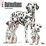 Dalmatians 2018 Wall Calendar