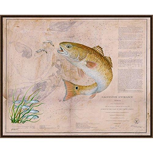Black Forest Decor Texan Redfish Framed Canvas (Redfish Framed)