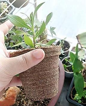 Abimars 50 Pcs 8 cm Pots de Graines de Fibres Biod/égradables pour Les Semis avec 50 Pcs /Étiquettes en Plastique pour Plantes 1 x 10 cm Stylo pour /Étiquettes de Plantes