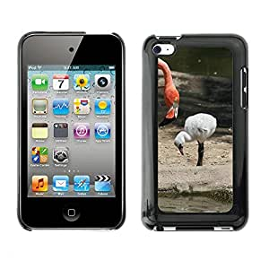 Etui Housse Coque de Protection Cover Rigide pour // M00112487 Flamingo novato Madre Baby Pink // Apple ipod Touch 4 4G 4th