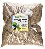 "Certified Organic Hard Red Wheat Sprouting Seed: 10 Pre-Measured Bags for 10""x20"" Trays (Approx 10 Lb) For Growing Wheatgrass to Juice, Grind for Flour & Bread, Ornamental Wheat Grass - Non-GMO"
