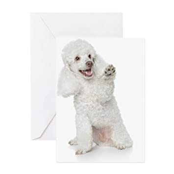 Amazon cafepress white toy poodle greeting cards pk of 10 cafepress white toy poodle greeting cards pk of 10 greeting card bookmarktalkfo Gallery
