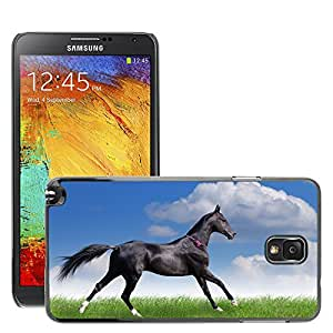 Hot Style Cell Phone PC Hard Case Cover // M00047101 freedom beauty elegance beautiful horse // Samsung Galaxy NOTE 3