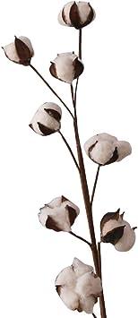 Wetour - Bolas de algodón natural, tallos de algodón, flores secas ...