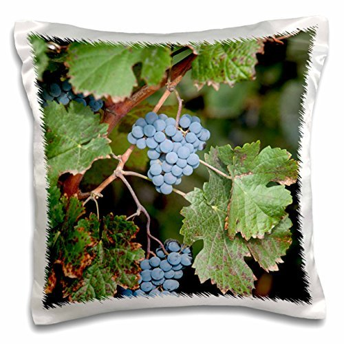 grapes-china-ningxia-merlot-grapes-hang-on-the-vine-helan-mountain-winery-16x16-inch-pillow-case