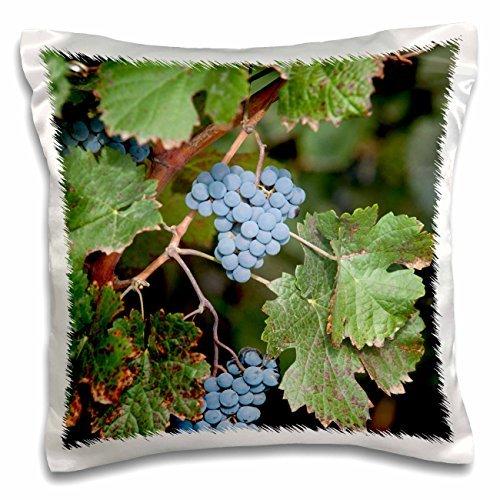 grapes-china-ningxia-merlot-grapes-hang-on-the-vine-helan-mountain-winery-16x16-inch-pillow-case