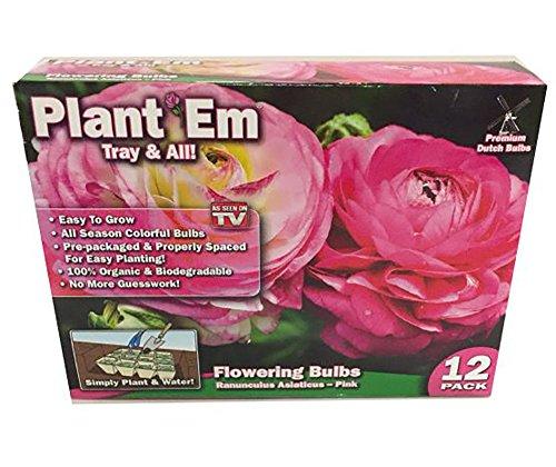 Plant Em Tray & All Flower kit 12 Pack Pink Ranunculus Asiaticus Flowering Bulbs - Ranunculus Bulbs
