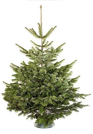 Wie Zeichne Ich Einen Tannenbaum.Weihnachtsbaum Echt Nordmanntanne 180 Cm