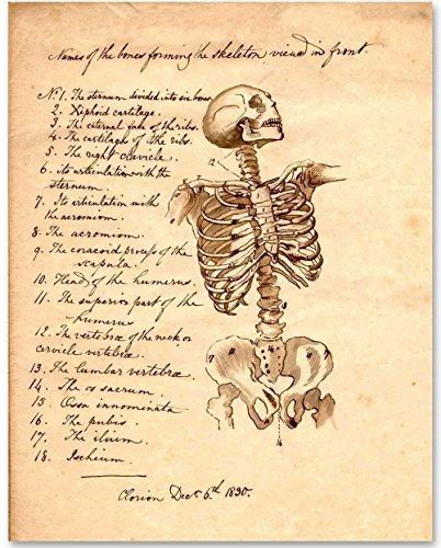 Art Personalized Prints Name (Skeleton - Names of Bones - 11x14 Unframed Art Print - Great Gift for Medical and Nursing Students)