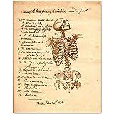 Skeleton - Names of Bones - 11x14 Unframed Art Print - Great Gift for Medical and Nursing Students