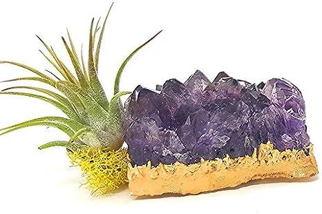 Crystal Garden Teardrop Glass Terrarium Quartz Terrarium Geometric Glass Planter Amethyst