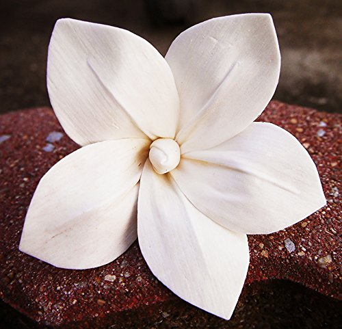 50 Frangipani White Balsa Wood Sola Diffuser Flowers 8 cm Dia.for wholesale (Balsa Wood Wholesale)