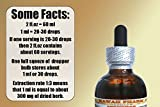 Chaparral Alcohol-Free Liquid Extract, Chaparral