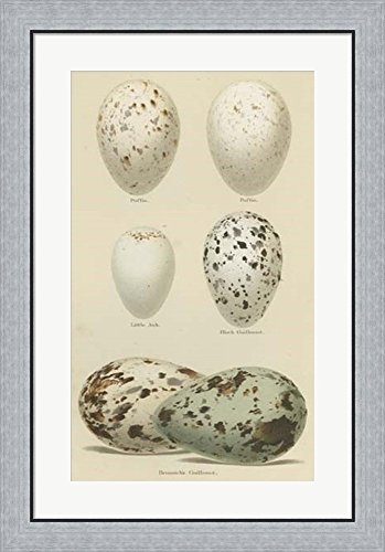 Antique Bird Egg Study II by Henry Seebohm Framed Art Print Wall Picture, Flat Silver Frame, 23 x 33 inches