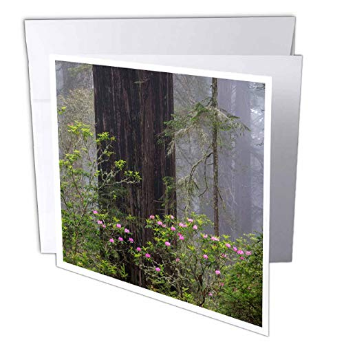 3dRose Danita Delimont - Trees - California, Del Norte Coast State Park, Redwood Trees, rhododendrons - 6 Greeting Cards with envelopes (gc_314682_1)