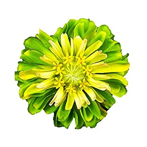 Zinnia Artificial Flower Pin Brooch/Hair Clip 30