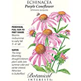 Purple Coneflower Seeds - 500 mg - Echinacea