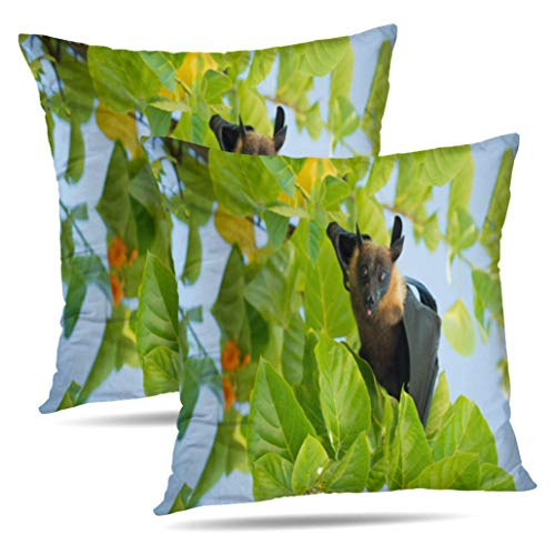 orative Pillow Covers Indian Flying Fox Fruit Animal Asia Big Black Elements Double-sided Pattern Invisible Zipper Applies to Living Room ()