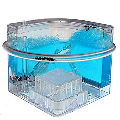 10 Cm Gel System (Forin Ant Castle Fram With Feeding System, Newfangled Toy For All Ages, Bioscience Learning, Observing Ant Habit Big Size Color Blue)