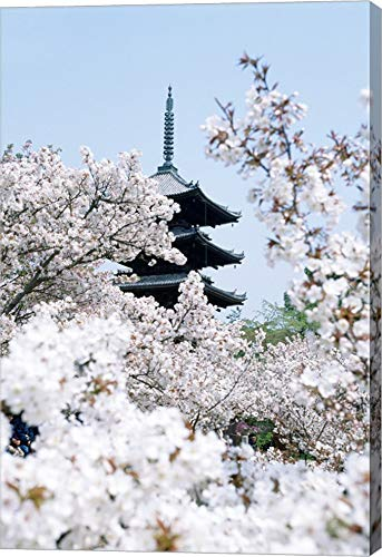 Cherry Blossom Trees, Kyoto, Honshu, Japan Canvas Art Wall Picture, Gallery Wrap, 19 x 28 inches