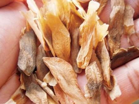 50 PLUMERIA MIXED SEEDS - Fresh&High Quality seeds by Enjoy_Shop