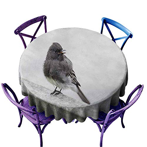 Acelik Stain Resistant Round Tablecloth,Black Phoebe (Sayornis nigricans),High-end Durable Creative Home,60 ()
