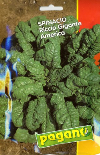 pagano-3439-spinach-spinacio-riccio-gigante-america-seed-packet
