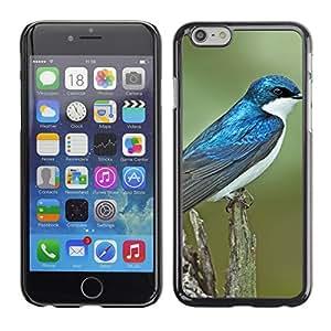 "Carcasa Funda Case //Swallow Bird V0000254// Apple iPhone 6 4.7"""