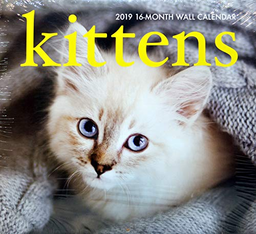 Kittens 2019 16-Month Wall Calendar