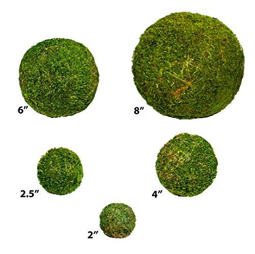 """SuperMoss (21807) Moss Balls, Fresh Green, 2"""" (6 pack)"""