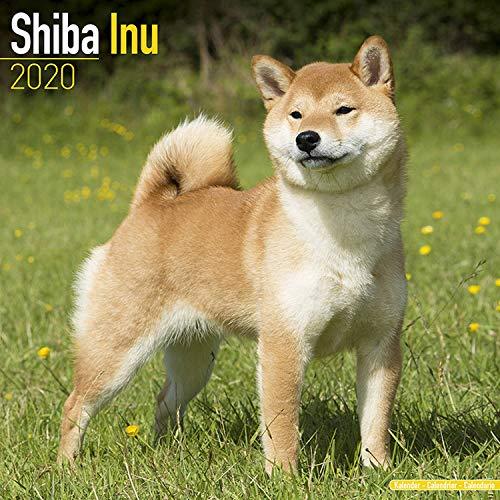 Shiba Inu Calendar 2020 - Dog Breed Calendar - Wall Calendar 2019-2020 ()
