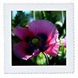 WhiteOaks Photography and Artwork - Poppy Flowers - Dark Pink Poppy Flower is a close up shot of poppy flowers - 8x8 inch quilt square (qs_232027_3)