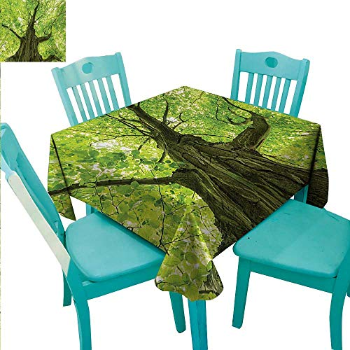 (Forest Square Polyester Tablecloth Old Big Majestic Tree Environment Countryside Eco Solidarity National Park Scenery Washable Polyester - Great for Buffet Table, Parties, Holiday Dinner, Wedding &)