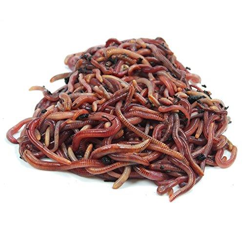 ... de compostaje Starter - lumbricidae - eisenia Compost Gusano Moorland activo - Gusanos para jardín & Compostaje. Compost compostador Gusano Kom Póster ...