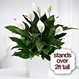 Expression Of Love - Flowers For Funeral - Funeral Flower Arrangements - Funeral Plants - Same Day Funeral Flowers - Condolence Flowers