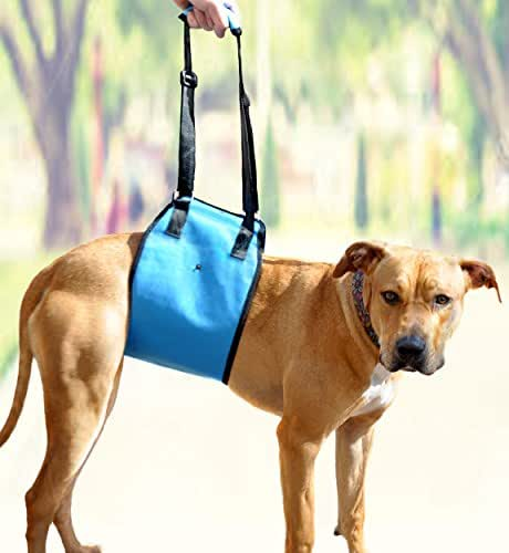 AMZpets Large Dog Lift Harness. Helps Dogs with Weak Front or Back Legs. Lifting Support Sling is Recommended by Veterinarians for Pain Relief, Rehabilitation, Surgeries and Handicapped Canines