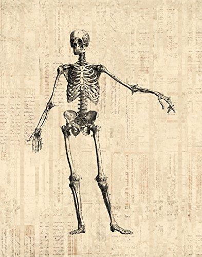 51pc f6eLEL amazon com vintage skeleton artwork antique medical anatomy
