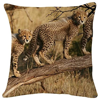 Strange Amazon Com Cheetah Cubs South Africa National Geographic Onthecornerstone Fun Painted Chair Ideas Images Onthecornerstoneorg